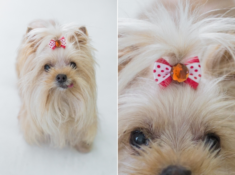 Simple Valentine Bow Adorable Dog - Bailey-Blog-3(pp_w768_h573)  Image_914076  .jpg