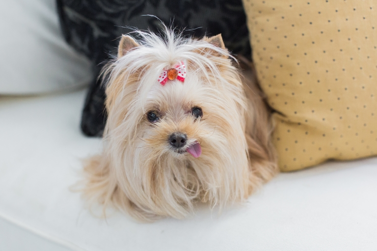 Good Valentine Bow Adorable Dog - Bailey-Blog-8(pp_w768_h511)  HD_708275  .jpg